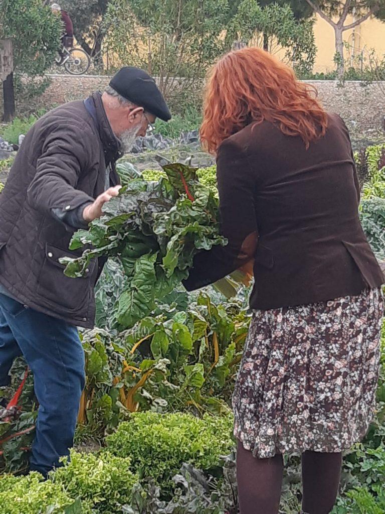 personas recogendo verdura huerta